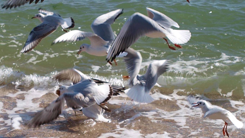 Школьный атлас-определитель птиц   765x1360