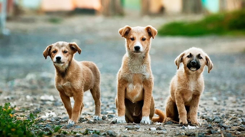 У Конотопі стерилізуватимуть бездомних собак
