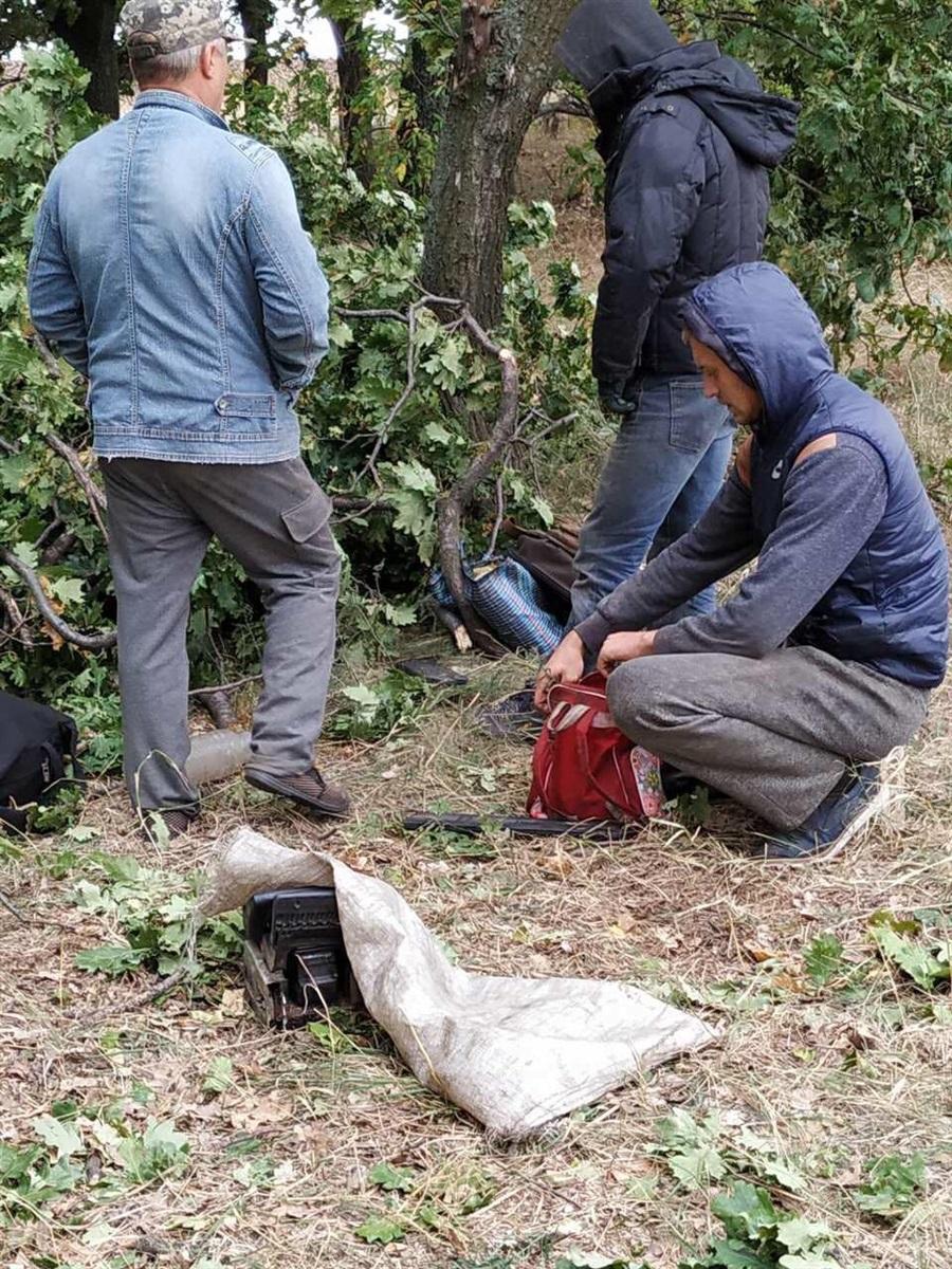 Лісоруби в Коханівському дубняку (спіймані на гарячому)