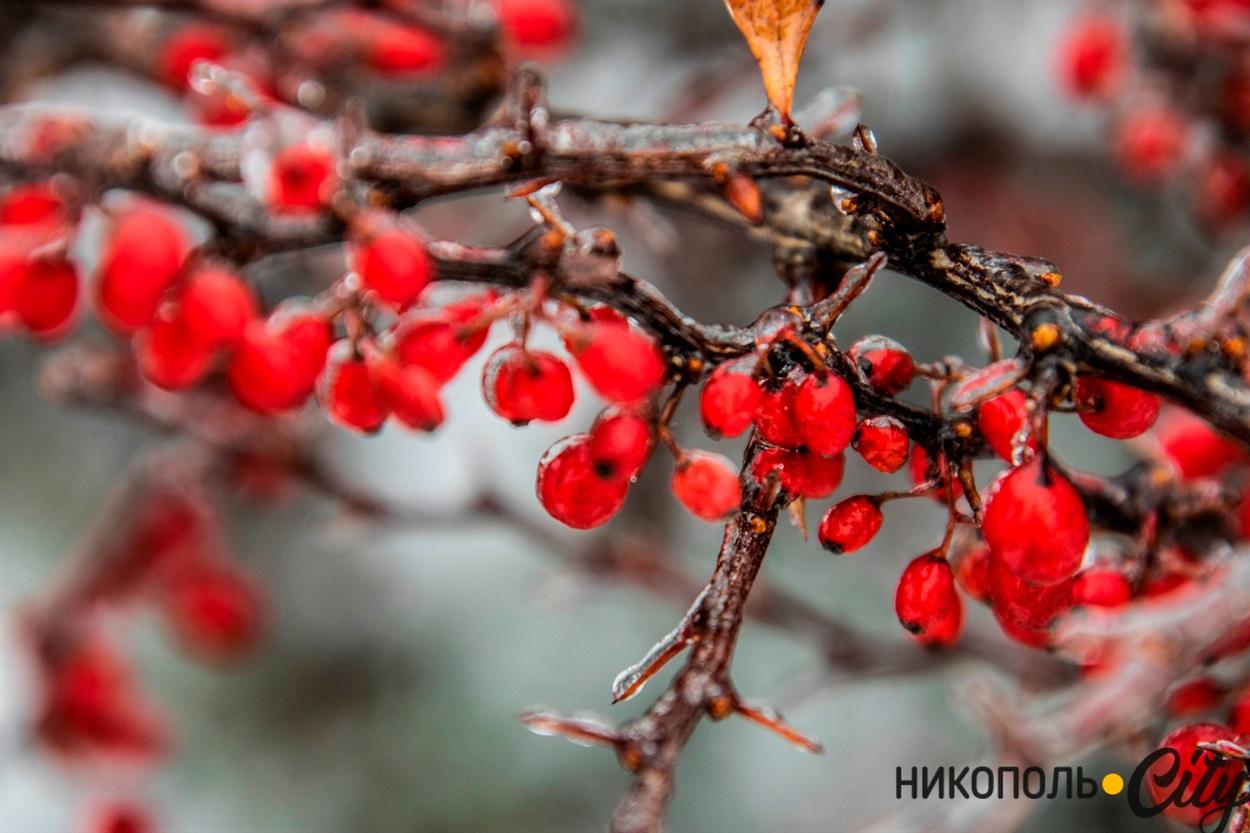 Мінусова температура перетворює рослини та дерева на щось казкове