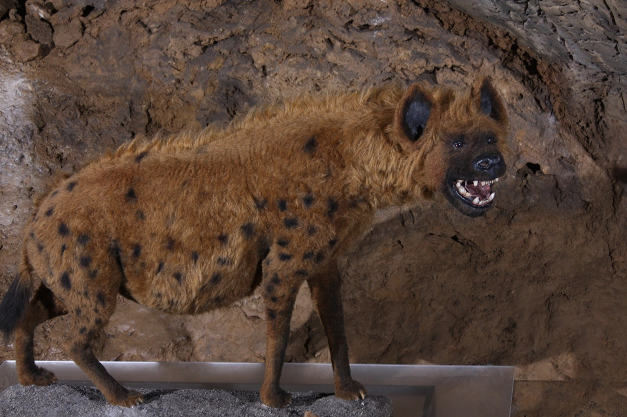 Печерна гієна